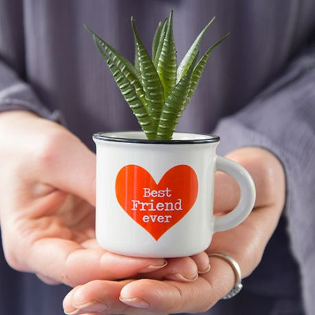 Mini Mug Succulent Best Friend
