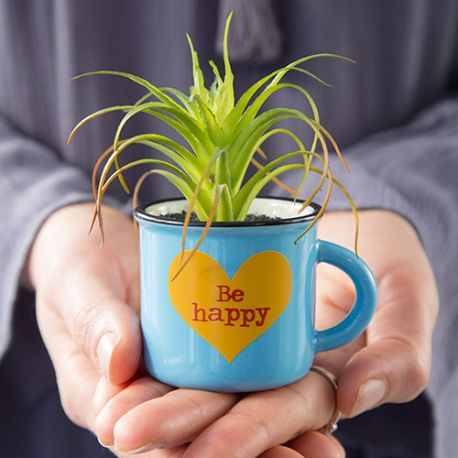 Mini Mug Succulent Be Happy